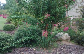 backyard with seasonal plants