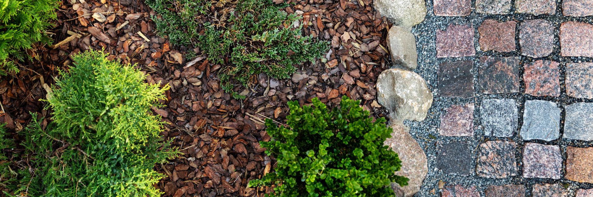Mulch installed around green plants.