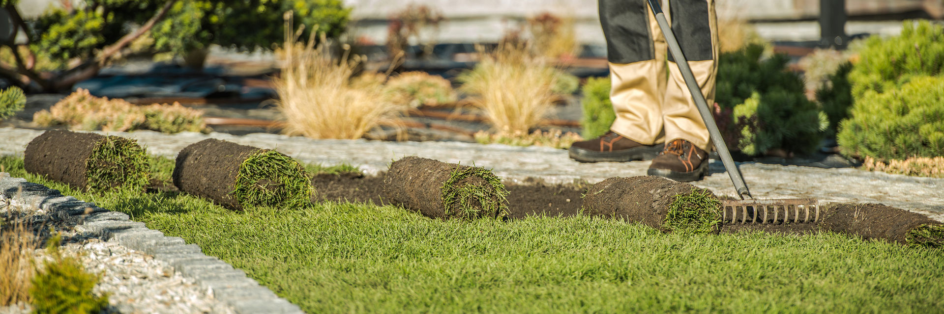 Professional landscaper installing sod