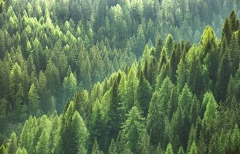 aerial view of forest trees