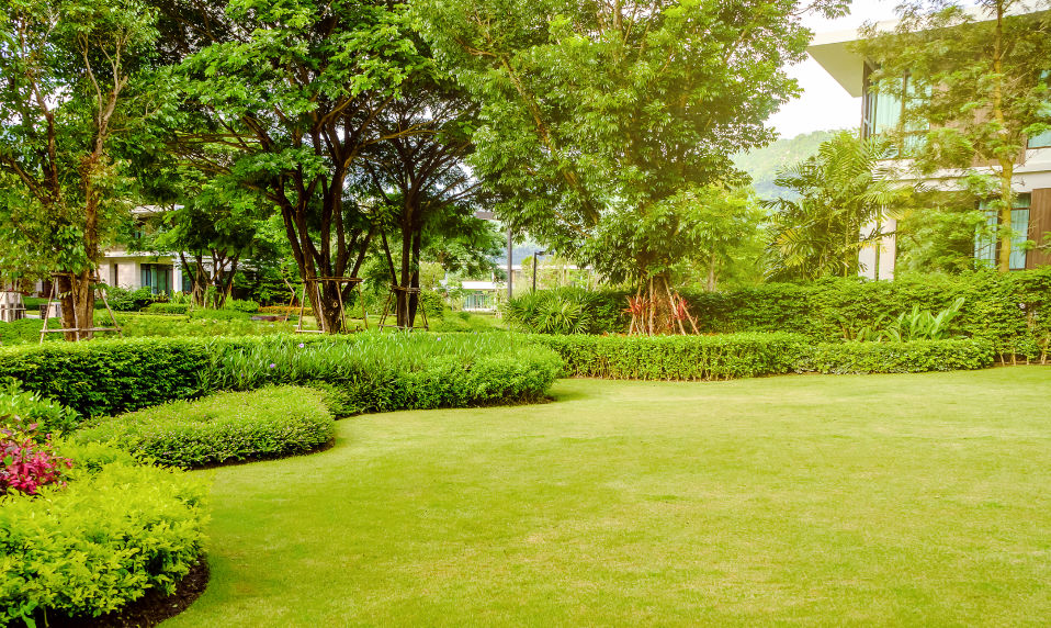 A landscaped backyard with a manicured lawn.