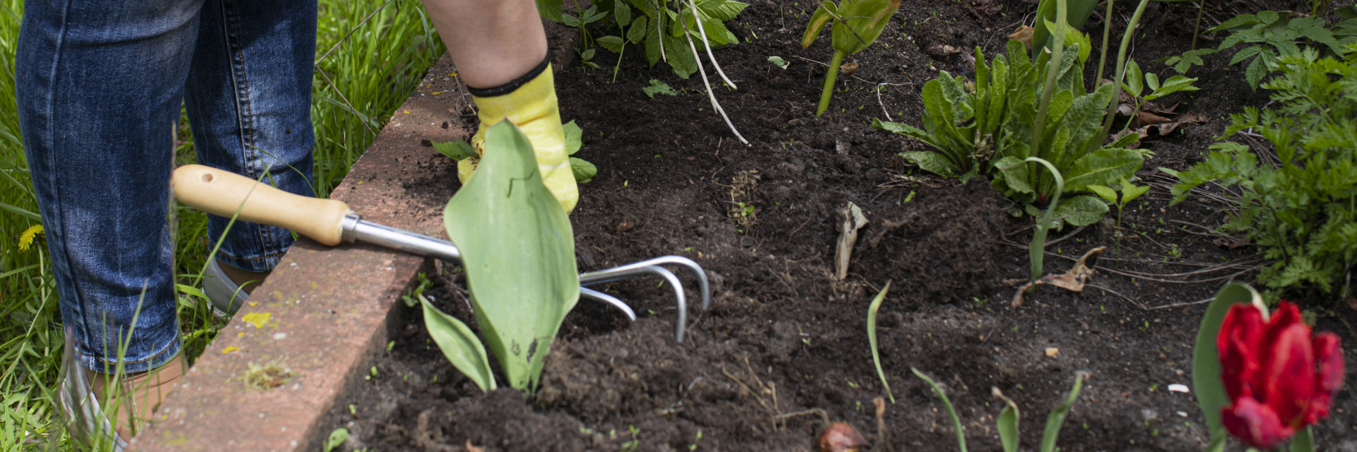 A professional planting seasonal flowers.