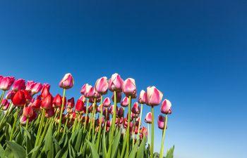 Spring Flowers Cumming GA